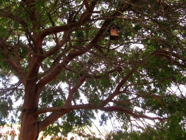 sobre arbres