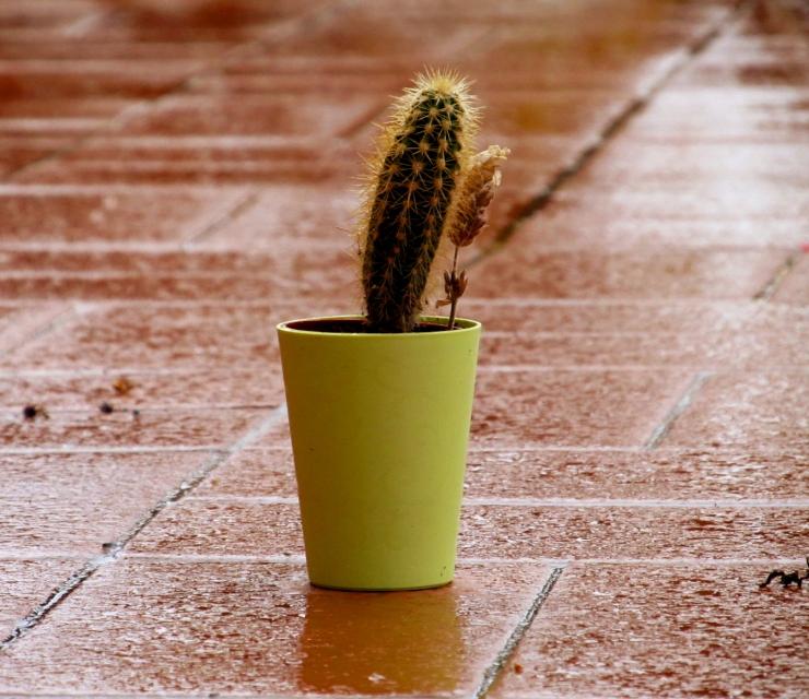 sobre cactus