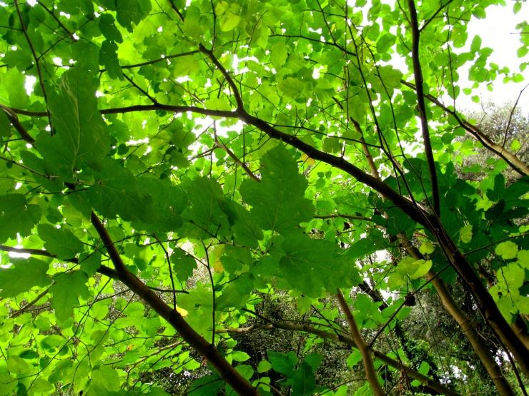 sobre arbres 2
