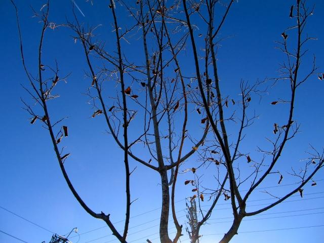 sobre arbres 3