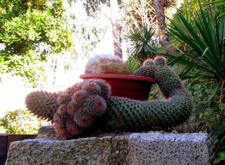 sobre cactus 2