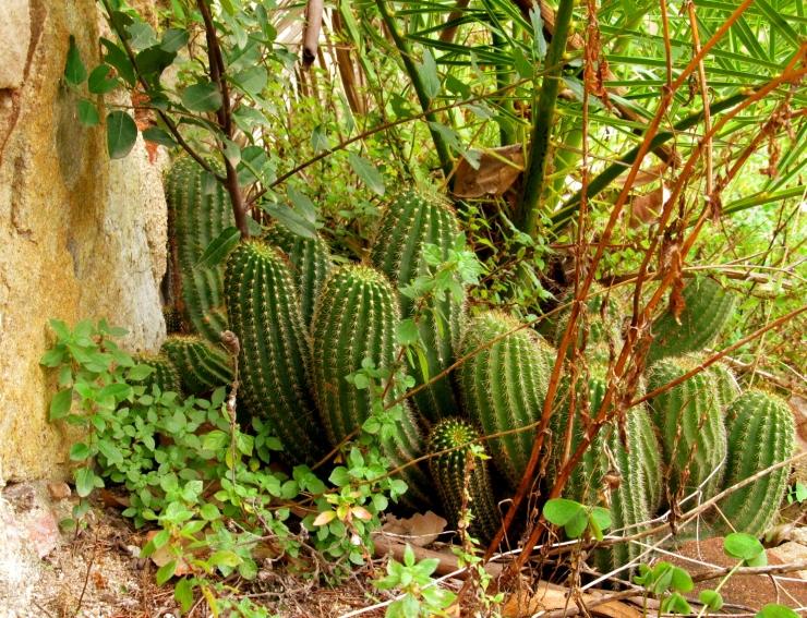 sobre cactus 3